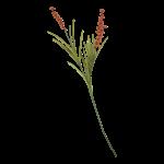 House Doctor - Buckthorn, Orange